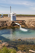 Groundwater well pumping into holding pond on Cardello Winery. Rod Cardella runs Cardella Winery, a family business since 1969, which grows almonds, broccoli and other crops as well as grapes. With the high price of water in recent years, Rod has turned to technology and drip irrigation to lower water usage and like many other farmers is planting high value crops such as almonds. Fresno County, San Joaquin Valley, California, USA