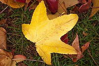 A yellow leaf seems to stand with arms outstretched saying look at me.