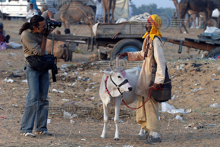 Two India's collide - a middle class domestic tourist snaps photos of a Hindu priest and his dubiously deformed cow at the annual Pushkar Fair (Pushkar Mela).