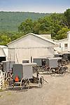 Amish buggies parked at farm for barn raising. Sugar Valley, PA.