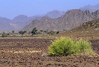 Rusraq, Oman.  Landscape near Rustaq.