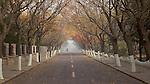 Street View In Winter, Badaguan, Qingdao.