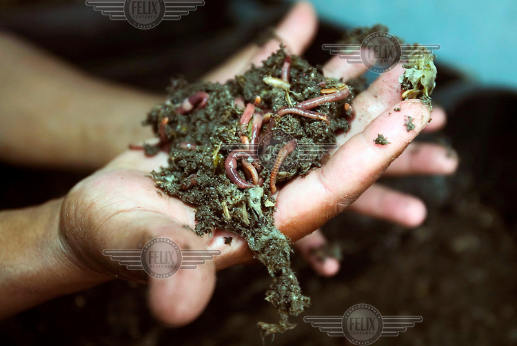 The Mount Nelson Hotel uses worms to help recycle its leftover food into compost. The broken-down waste is used as a fertiliser for the hotel gardens.