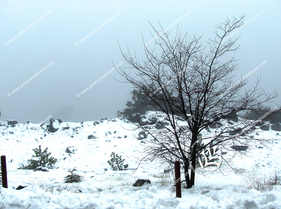Gorgeous dry tree with dark brown branches against the background of white snow on Troodos mountains,Cyprus.