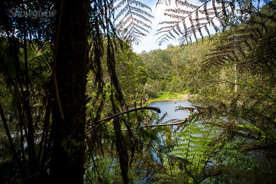 Image Ref: CA612<br /> Location: Lake Elizabeth, Forrest<br /> Date of Shot: 20.10.18