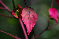&quot;ELEGANT ELM&quot;<br />