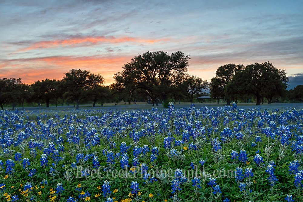 Capture this wonderful field of bluebonnets and some little yellow wildflowers landscape right as the sun was setting in the Texas hill country.  We liked the colorful sky as it came through the trees and with just a hint of light left on the bluebonnets make for an almost perfect day.