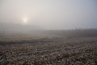 Peaceful Harvested Farmer's field in the morning fog