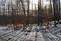 35 David Lane (Pisgah Lots), Saranac Lake, NY - Bob Martin