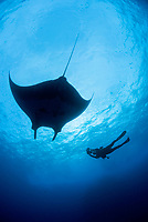 Fisheye silhouette of giant Pacific manta ray, Manta birostris, and videographer diver in the Revillagigedo Islands, Pacific Ocean