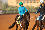 RIYADH,SAUDI ARABIA-FEB 27: Trais Fluors excercises for Neom Turf Cup at King Abdulaziz Racetrack on February 28,2020 in Riyadh,Saudi Arabia. Kaz Ishida/Eclipse Sportswire/CSM