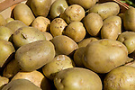 Close-up of organic potatoes at the Coventry farmers market, Connecticut