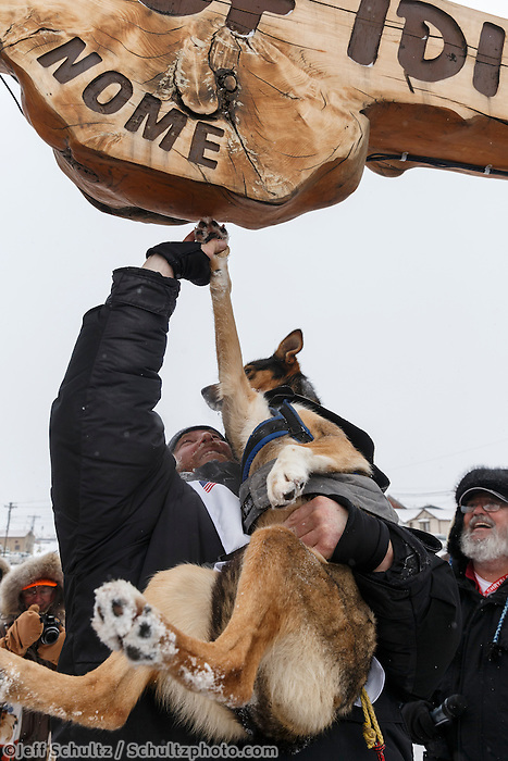 Justin Savidis touches his lead dogs' paw holding a special coin on the burl arch finish line in a memorial gesture to the late Omer Chartrand, the father of an Iditarod Insider editor at Nome on Thursday March 13 during the 2014 Iditarod Sled Dog Race.<br />