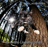 REALISTIC ANIMALS, REALISTISCHE TIERE, ANIMALES REALISTICOS, cats, paintings+++++,USLGSC162044505,#A#, EVERYDAY ,photos,fotos,pounce,cat,cats,kitten,kittens,Seth