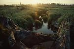 Skagit River Estuary, Cattail zone, Puget Sound, Washington State, Pacific Northwest, North America, Skagit Delta Wetlands, 1993, Skagit County, WWRP, WSFW, Critical Habitat,.