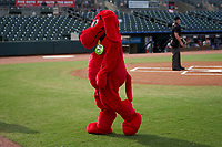 Clifford the Big Red Dog before a Palm Beach Cardinals Florida State League game against the Clearwater Threshers on August 10, 2019 at Roger Dean Chevrolet Stadium in Jupiter, Florida.  Clearwater defeated Palm Beach 11-4.  (Mike Janes/Four Seam Images)