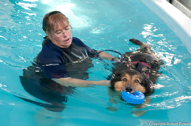 Dog in Hydrotherapy pool, UK