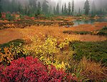 Mount Baker-Snoqualmie National Forest, WA <br /> Autumn leafed huckleberry and willow with low growing heathers and grasses along the edge of Picture Lake at Heather Meadows