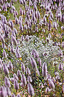 Desert Wildflower Interactions-Watarrka/Kings canyon