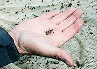 Fish Camp Manager Scott Tarrant shows off a stone fly bug while fishing near Colorado Springs, Colorado, Monday, May 4, 2015. <br /> <br /> Photo by Matt Nager