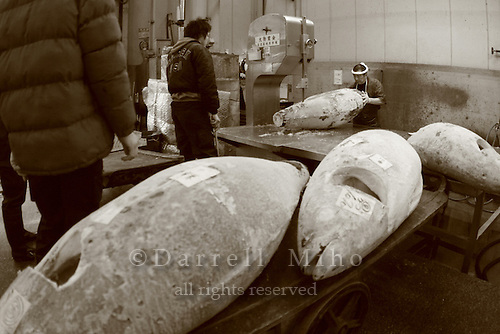 Mar 4, 2006; Tokyo, JPN; Tsukiji.A worker cuts frozen tuna in a warehouse at the Tsukiji Fish Market...After tuna is caught, it is flash frozen at sea to keep it fresh until it is brought to the market to be sold...Photo credit: Darrell Miho