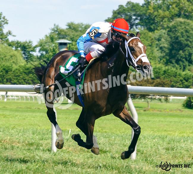Langfirst winning at Delaware Park on 8/24/16