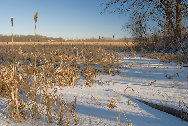 a Grassland and wetland complex at Moraine Hills State Park in McHenry County, Illlinois is lined with trees and cattail reeds