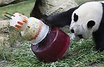 Foto: VidiPhoto<br /> <br /> RHENEN - De twee reuzenpanda&rsquo;s Xing Ya en Wu Wen hebben dinsdag hun eerste verjaardag in hun verblijf Pandasia in Ouwehands Dierenpark gevierd. Beide panda&rsquo;s vieren hun vierde verjaardag en werden getracteerd op een meerlaagse speciale verjaardagstaart, tevens speelobject. Het mannetje Xing Ya is jarig op 5 augustus en het vrouwtje Wu Wen op 11 augustus. Al snel werd door de Rhenense dierentuin besloten om de verjaardagen gezamenlijk op de 8ste dag van de 8ste maand te vieren. Het getal 8 is in de Chinese cultuur namelijk een geluksgetal. Wu Wen kreeg haar taart binnen. Pers en publiek mochten genieten van Xing Ya, die de taart in korte tijd vakkundig wist te sloten. Ook de bezoekers van het park kregen een stuk taart aangeboden. De publieke belangstelling voor de panda&rsquo;s lijkt tegen te vallen. Het personeel mag daar geen uitspraken over doen, anders dan dat men over het bezoekersaantal &lsquo;tevreden&rsquo; is. De verwachte verkeersproblemen en lange wachtrijden bij de kassa blijven echter uit.