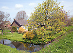 Farmhouse on small polder with canals, near Schipluiden, Netherlands