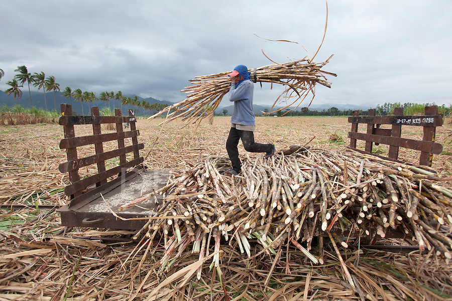 A man harvests sugar cane near Bias City on Negros, Philippines.