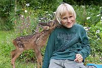 Rehkitz, Reh-Kitz, verwaistes, pflegebedürftiges Jungtier wird in menschlicher Obhut großgezogen, Kind, Junge mit Kitz im Garten, Kitz nuckelt und leckt am Ohr des Kindes, Tierkind, Tierbaby, Tierbabies, Europäisches Reh, Ricke, Weibchen, Capreolus capreolus, Roe Deer, Chevreuil