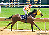 Media's Delite winning at Delaware Park on 6/2/16