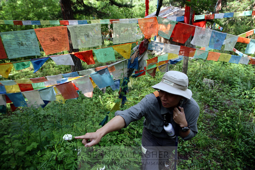 A park warden points out a wild flower in the Jiuzhaigou National Park. Sichuan Province. China. 2011