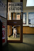A dog waits for its owner as he votes in the Mortimer Rooms polling station during the Nailsworth Parish council elections in Gloucestershire.