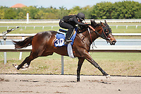 #30Fasig-Tipton Florida Sale,Under Tack Show. Palm Meadows Florida 03-23-2012 Arron Haggart/Eclipse Sportswire.