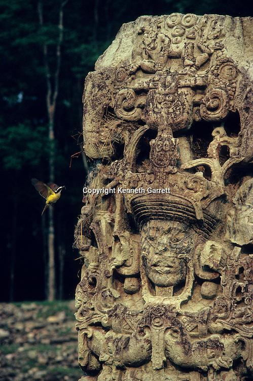 Copan; 18 Rabbit; Stele; Honduras; Maya