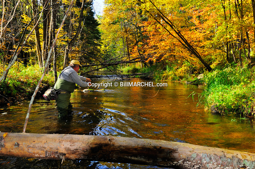 00416-030.17 Fishing:  Angler is fly fishing on stream.  Fall color, brook trout, brown trout, flies, wade.