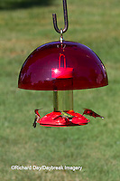 01162-12909 Ruby-throated Hummingbirds (Archilochus colubris) at Dr. JB's Hummingbird Feeder with Hummer Helmet, Marion County, IL
