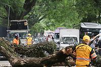 06.11.2019 - Queda de árvore na av Rebouças em SP