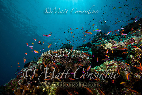 Reef fish swarming in amazing blue water, Yap Micronesia (Photo by Matt Considine - Images of Asia Collection) (Matt Considine)