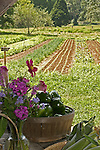 View of garden rows. Peppers and flowers in foreground.