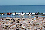 Horse and riders  wade along on Rossbeigh Strand in County Kerry. Local councillor Michael Cahill says the beach will be washed away in future years due to coastal erosion.<br /> Picture by Don MacMonagle<br /> Picture by Don MacMonagle Story by Anne Lucey