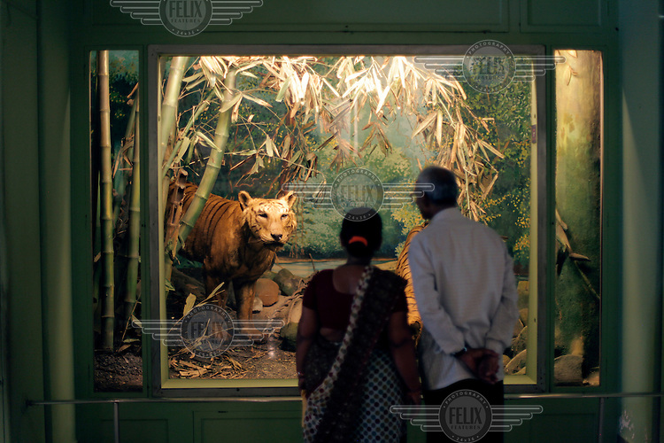 Natural history section at the The Prince of Wales Museum of Western India, with tourists watching a display with stuffed tigers.