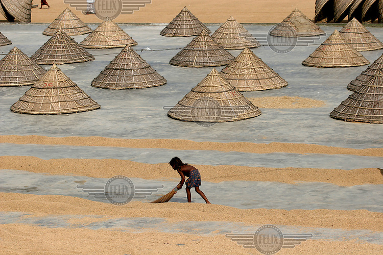 Child works in a rice drying factory.