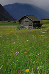 Cattle shelter in spring meadows. Imst area, Austria, The Alps