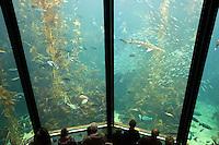 United States of America, California, Monterey County: Monterey Bay Aquarium | Vereinigte Staaten von Amerika, Kalifornien, Monterey County: Monterey Bay Aquarium