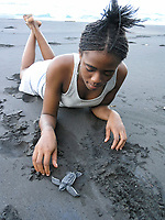 local researcher looks over leatherback sea turtle hatchling, Dermochelys coriacea, before release, Dominica, West Indies, Caribbean, Atlantic