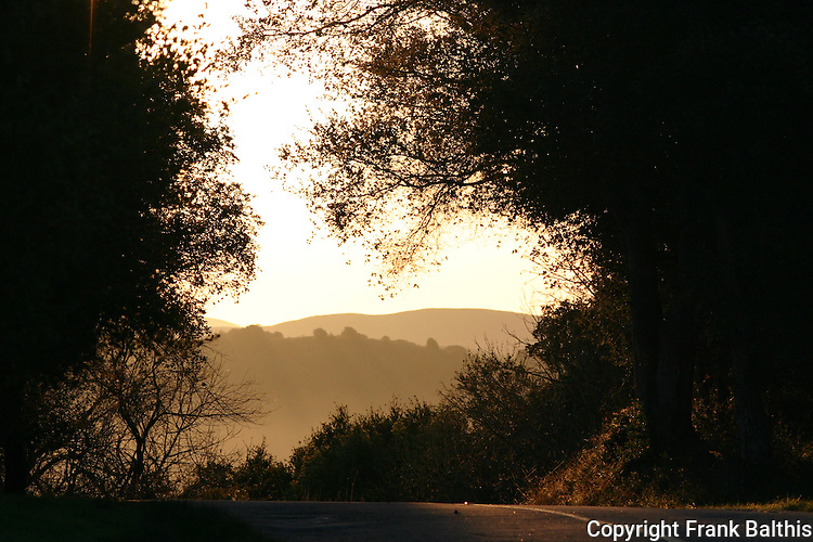 Early morning on Redwood Drive in Castro Valley