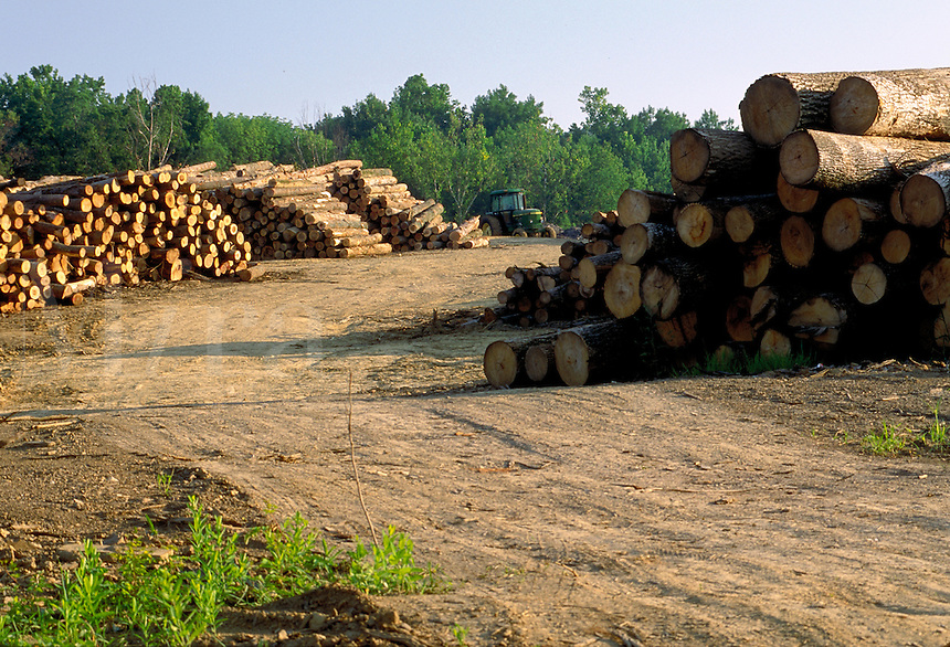 Logs awaiting processing at a sawmill near Madisonville, Kentucky. Madisonville Kentucky.