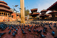 Pigeons surround the Pratapa Malla Column in  Durbar Square, Kathmandu, Nepal.